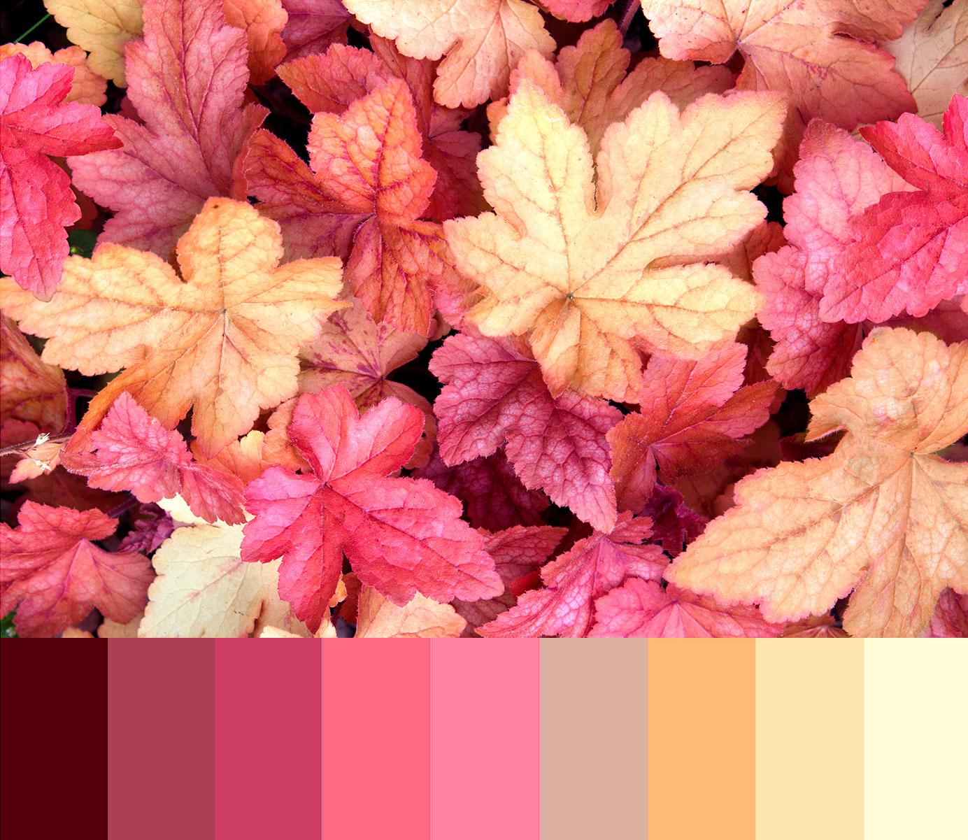 Trova la color palette adatta al tuo brand